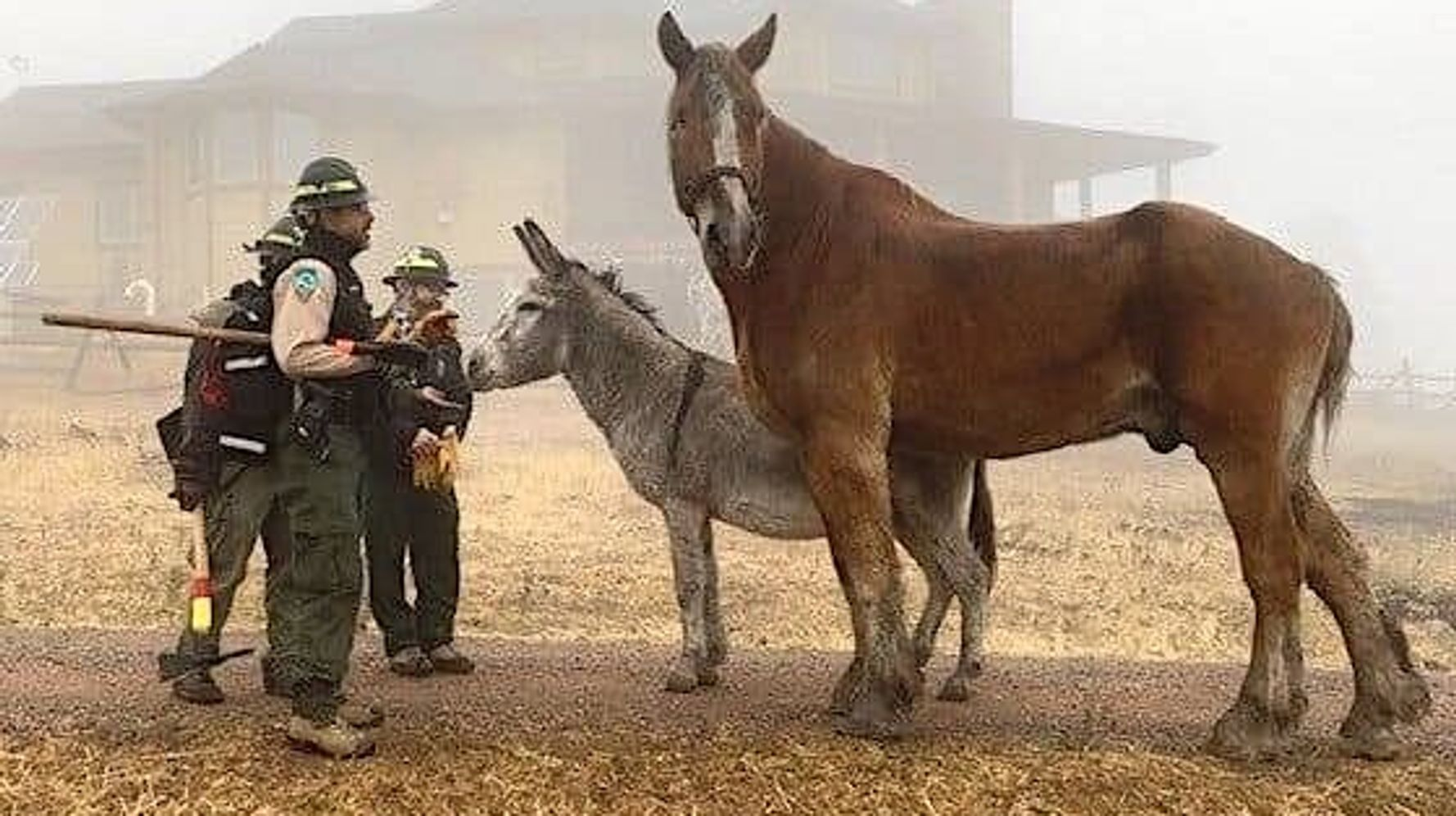 Donkey Love: Colorado Rancher Who Fled Fire Celebrates After Finding Pals Alive