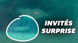 Ces nageurs et ces requins ont partagé la même balade dans un banc de