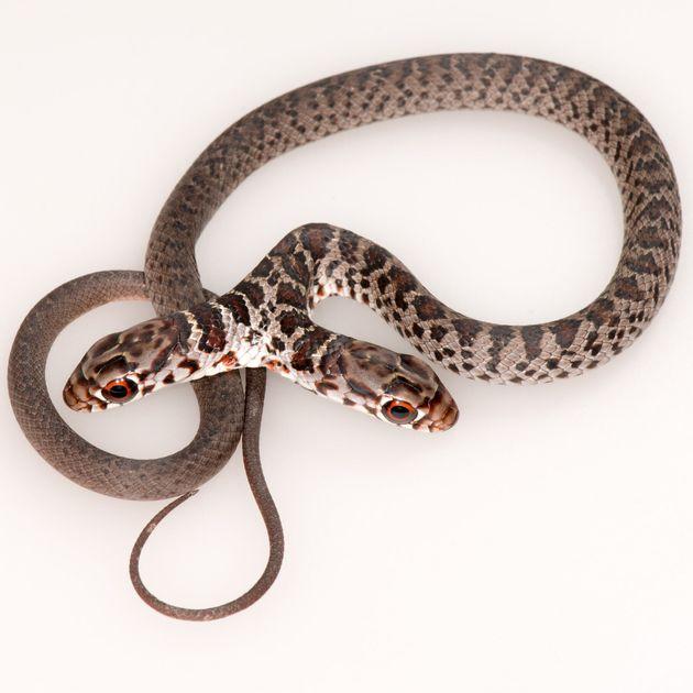 猫のオリーブが連れて帰ったヘビ