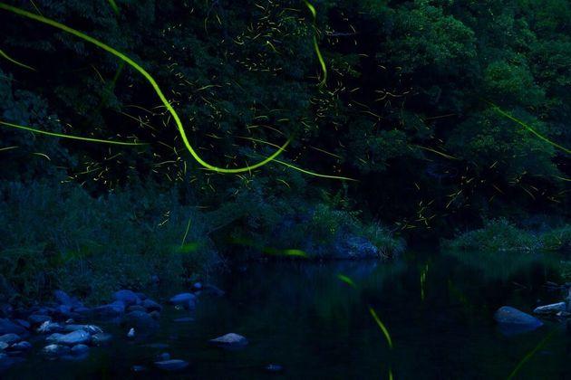 夏にはほたるが乱舞する石木川。出典:石木川まもり隊 撮影:村山嘉昭