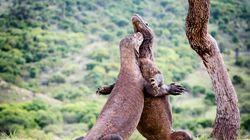 Φωτογραφία που έγινε viral προκαλεί ανησυχία για το Jurassic Park της