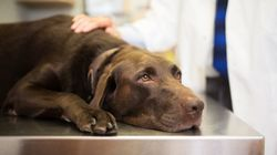 A Dog Caught COVID-19 In Ontario, But There's No Need To