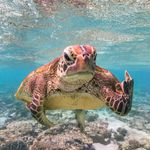 Las 16 fotos de animales salvajes más divertidas de