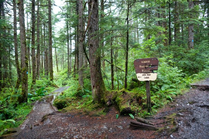 Signage to Muir's cabin on Auk Nu Trail in the Tongass National Forest at the fork of two dirt paths leading past mossy trees