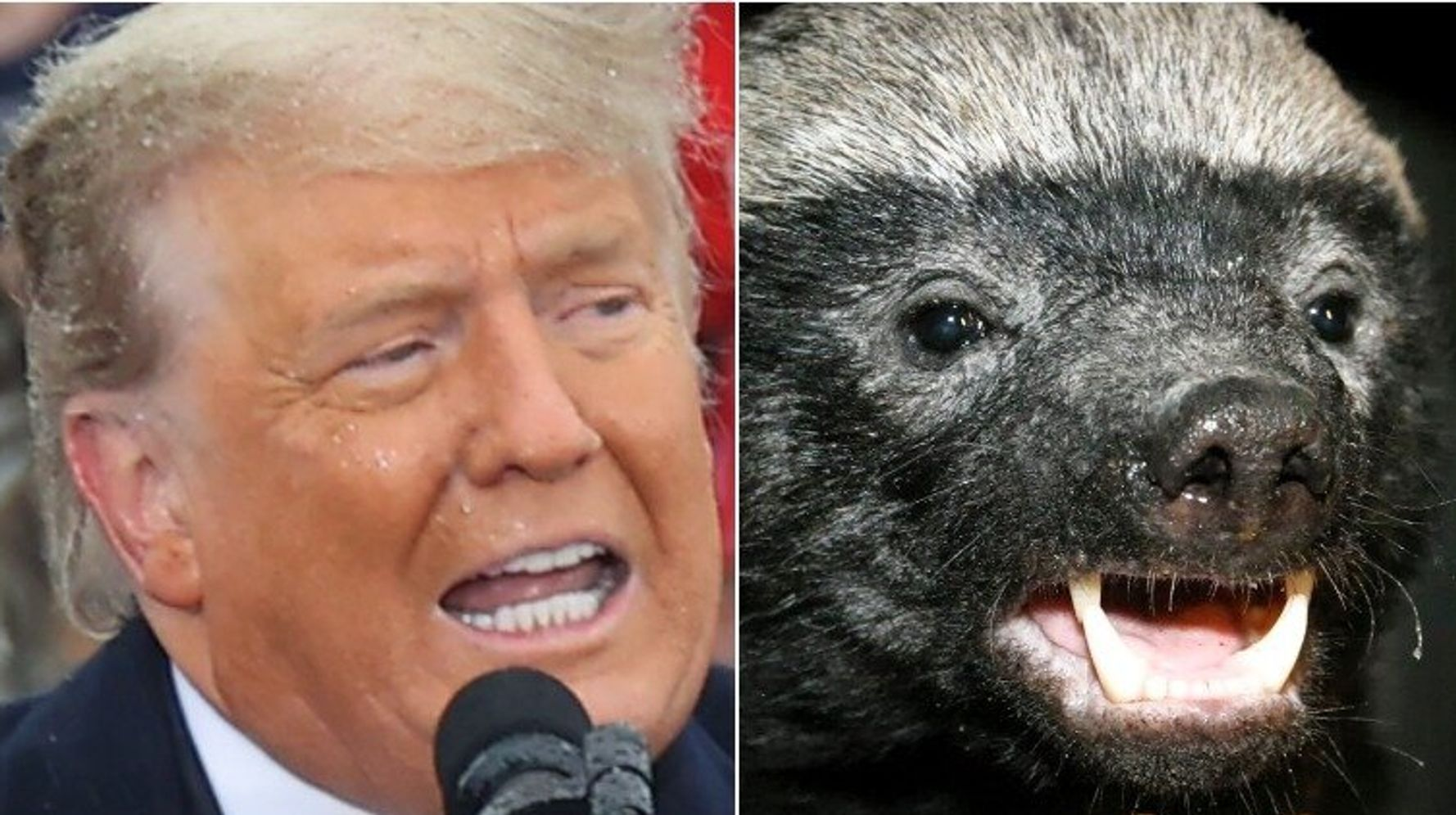 Lincoln Project Gives 'Covey Spreader' Trump The Honey Badger Treatment