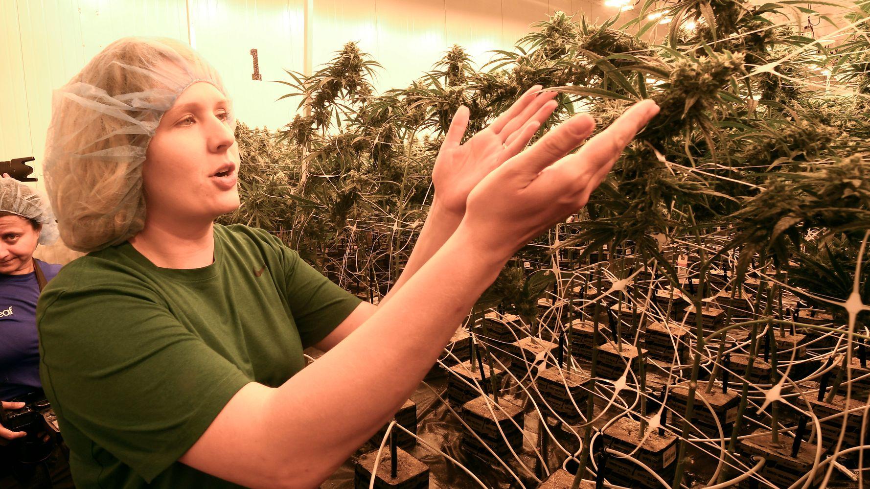 Marijuana Legalization Measures Pass In 5 States