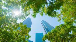 Ripensare le città attorno agli alberi (di F.