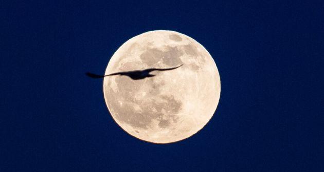 イスタンブールで見られた満月=2020年1月10日
