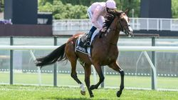 Melbourne Cup Horse Anthony Van Dyck Euthanised After Suffering Fractured