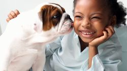 The Average Kid Asks For A Pet 1,584 Times. Is Now The Time To Say