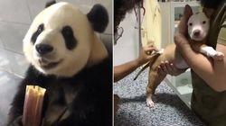 12 vídeos fofinhos com bichinhos para ver em um dia