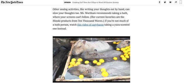 那須どうぶつ王国で撮影された柚子湯に入るカピバラを紹介しているニューヨークタイムズの記事