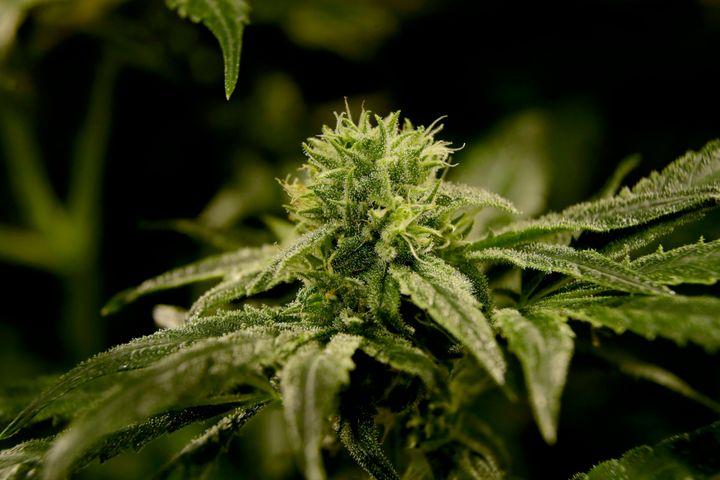 "Four states <a href=""https://www.huffpost.com/entry/marijuana-legalization-ballot-initiatives_n_5f9b1c2cc5b6e9dcc98bbe8d"">leg"