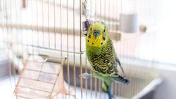 Σμύρνη: Πήγε να σώσει το πουλί της κι έσωσε την ζωή