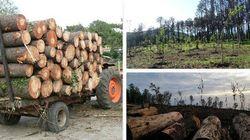 Abbattimento di piante secolari a Sorrento, la denuncia del Wwf (di L.