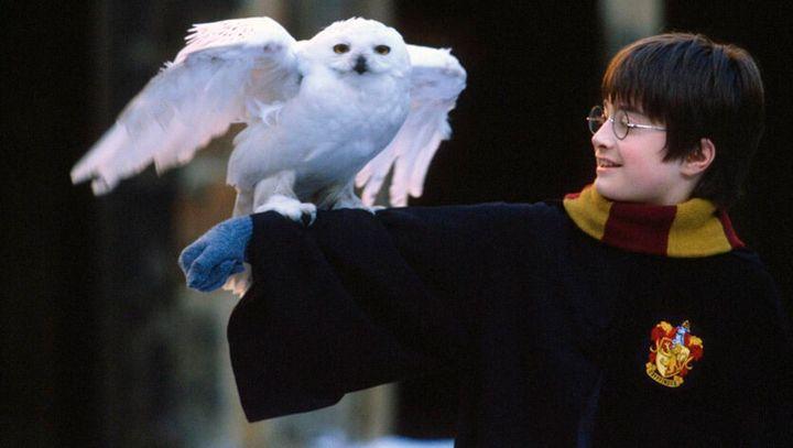 'Harry Potter y la piedra filosofal'.