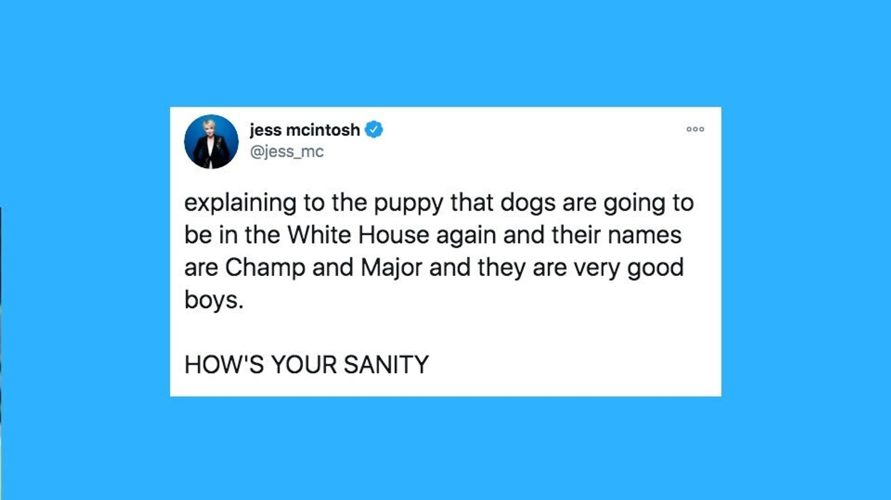 25 Of The Funniest Tweets About Cats And Dogs This Week (Oct. 31-Nov. 6)