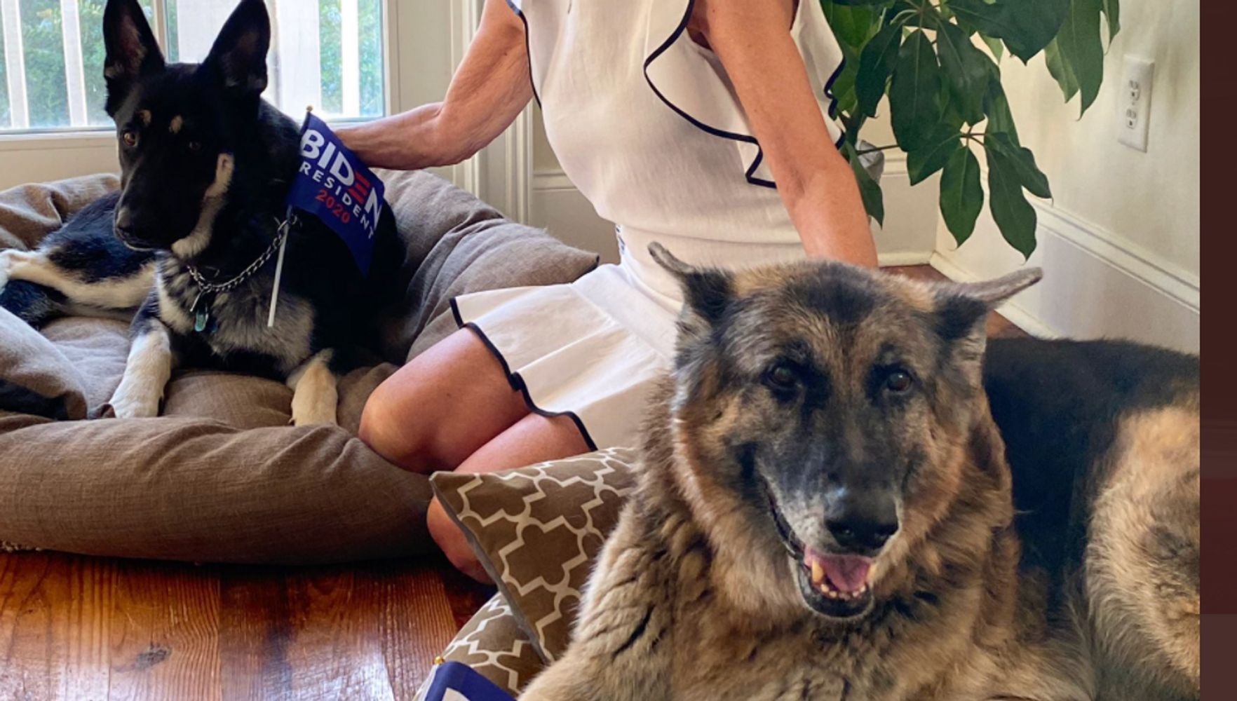 DOTUS: The Bidens' Dogs Champ and Major Debut Their Own Twitter Account