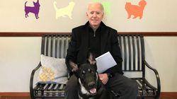 ホワイトハウスにワンコが帰ってくる…!動物保護施設から引き取ったバイデン家の愛犬