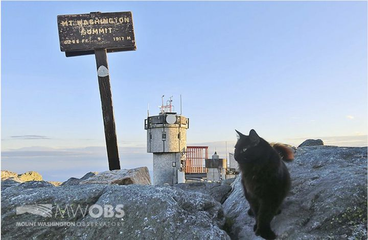 Marty the cat, who has patrolled the Mount Washington Observatory in North Conway, N.H., for 12 years has died.
