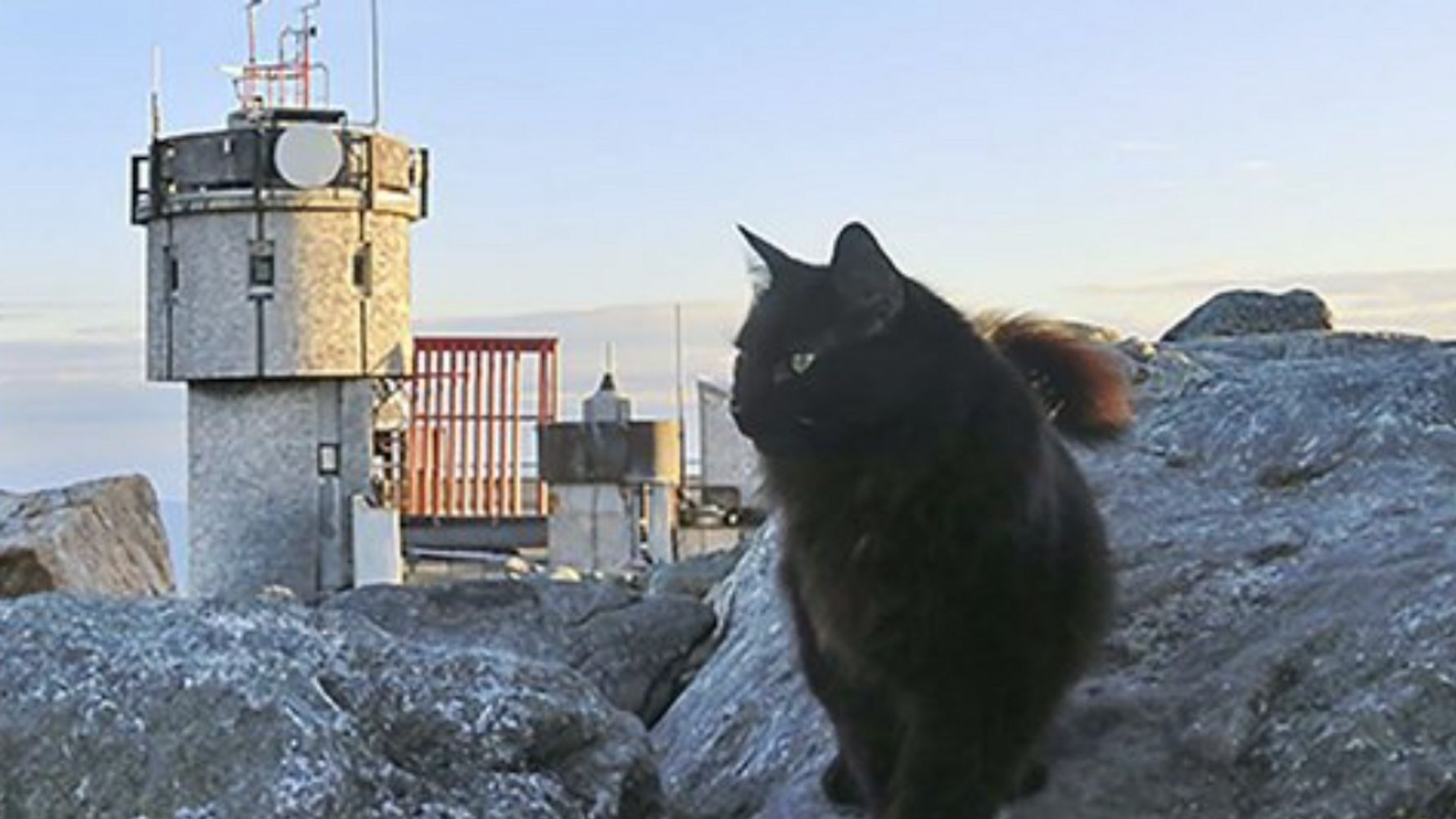 Cat Mascot At Northeast's Highest Peak Dies After 12 years On Duty