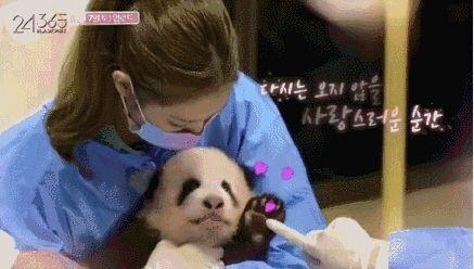 BLACKPINKのメンバーがパンダに触れるシーン(この予告は現在は削除されている)