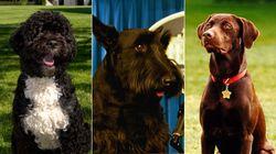 Los de Joe Biden y otros perros que fueron inquilinos de la Casa