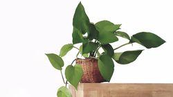 Nueve plantas que ayudan a dormir