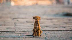 Αυξημένη η ζήτηση για υιοθεσίες αδέσποτων σκύλων στη