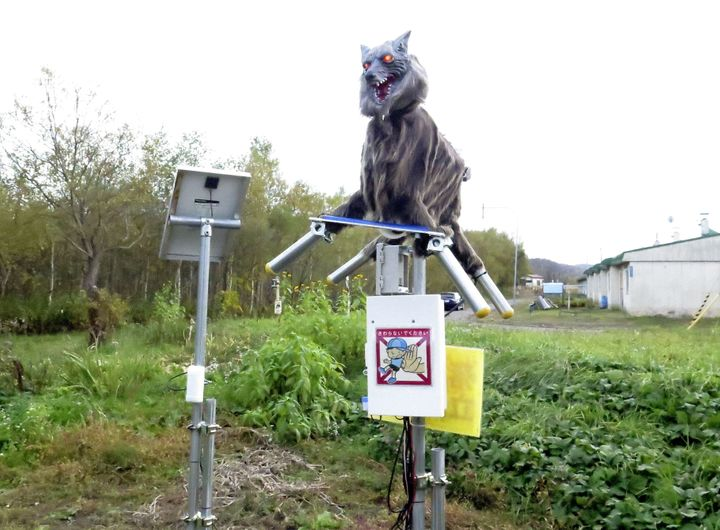 The town of Takikawa on the northern island of Hokkaido purchased and installed a pair of the robots after bears were found r
