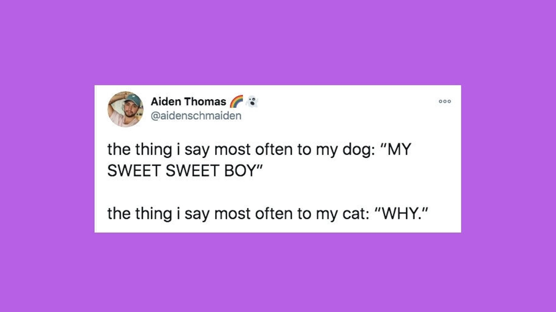 31 Of The Funniest Tweets About Cats And Dogs This Week (Nov. 7-13)