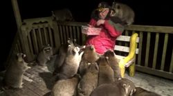 This Retired Canadian Feeds A Swarm Of Raccoons Almost Every