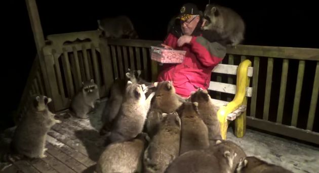 Jame Blackwood feeds raccoons on his back deck almost every
