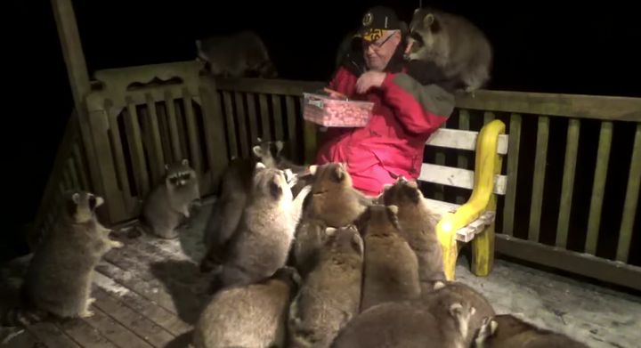 Jame Blackwood feeds raccoons on his back deck almost every night.