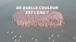 Ce groupe de flamants roses a illuminé un lac au