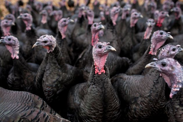Stuff The Rules! Poultry Workers Get Quarantine Exception To Avoid Christmas Turkey Shortage
