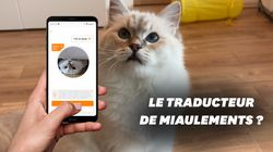 Que vaut Meow Talk, l'application qui traduit les miaulements de chat