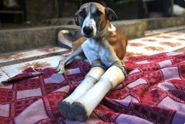 Η Οδύσσεια μίας ανάπηρης, αδέσποτης σκυλίτσας, από την Ινδία στην