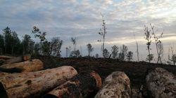 Pineta di Sorrento: dopo la denuncia su Huffpost intervengono i forestali (di L.