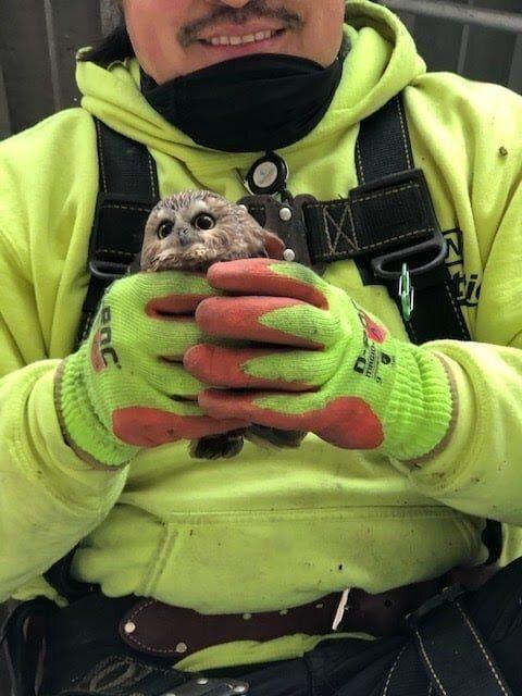 フクロウは、両手におさまるほどの大きさのようだ