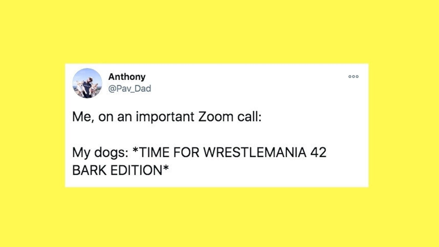 23 Of The Funniest Tweets About Cats And Dogs This Week (Nov. 13-20)