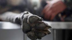 Κτηνωδία στο Βόλο: Νεαρός τραυμάτισε με βέλος έναν