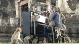 British musician Paul Barton plays the piano for monkeys that occupy abandoned historical areas in Lopburi, Thailand November 21 2020. Picture taken November 21, 2020. REUTERS/Prapan Chankaew