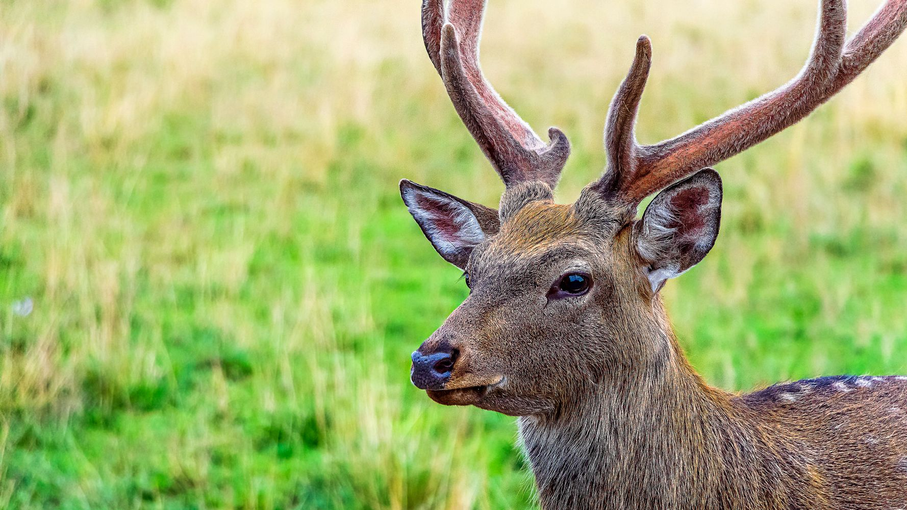 Czech Hunter Reports Rifle-Stealing Deer To Police