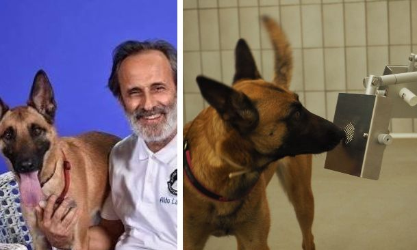 Aldo La Spina; i cani del Medical Detection Dogs di Novate Milanese