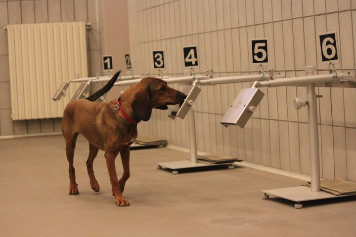 I cani del Medical Detection Dogs di Novate Milanese