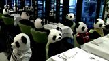 A German restaurant is hosting stuffed pandas in lieu of human customers as a protest against the country's pandemic lockdowns.