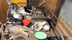 猫139匹の多頭飼育 50代夫婦を動物愛護法違反の疑いで書類送検