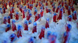 Demócratas, republicanos y el Día de Acción de Gracias: ¿Es posible la