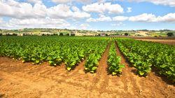 Philip Morris investe 100 milioni nella filiera italiana del
